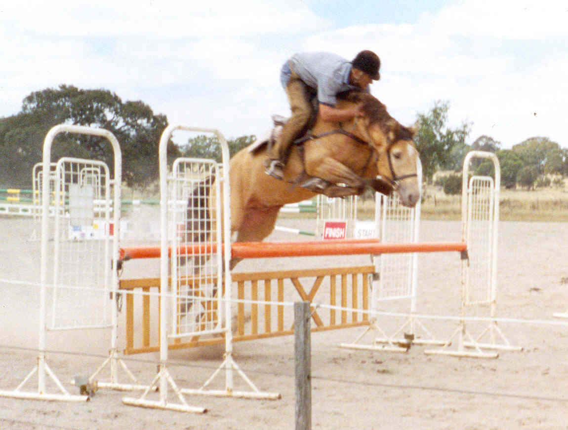 Clydesdale horse jumping